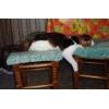 Настоящая кошка ест и спит везде