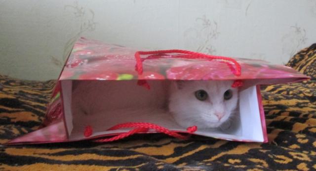 Хозяин, ты точно домик для кошек купил?