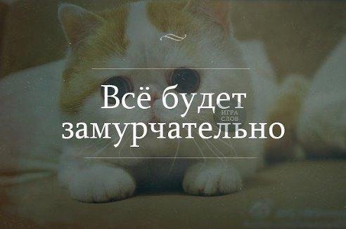Фотография Мурыся