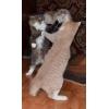 Первенство квартиры по кошачьему боксу